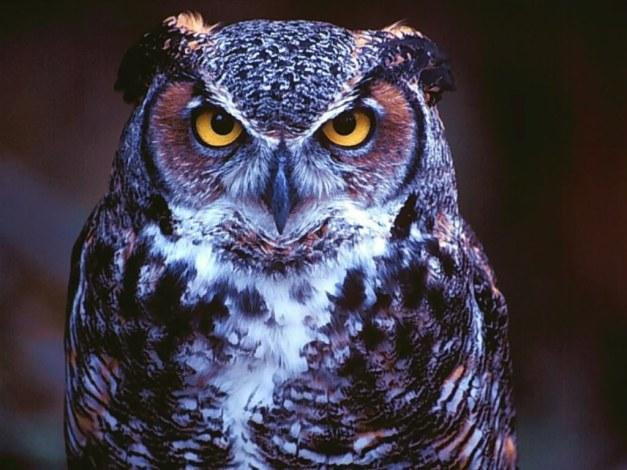 Owljay